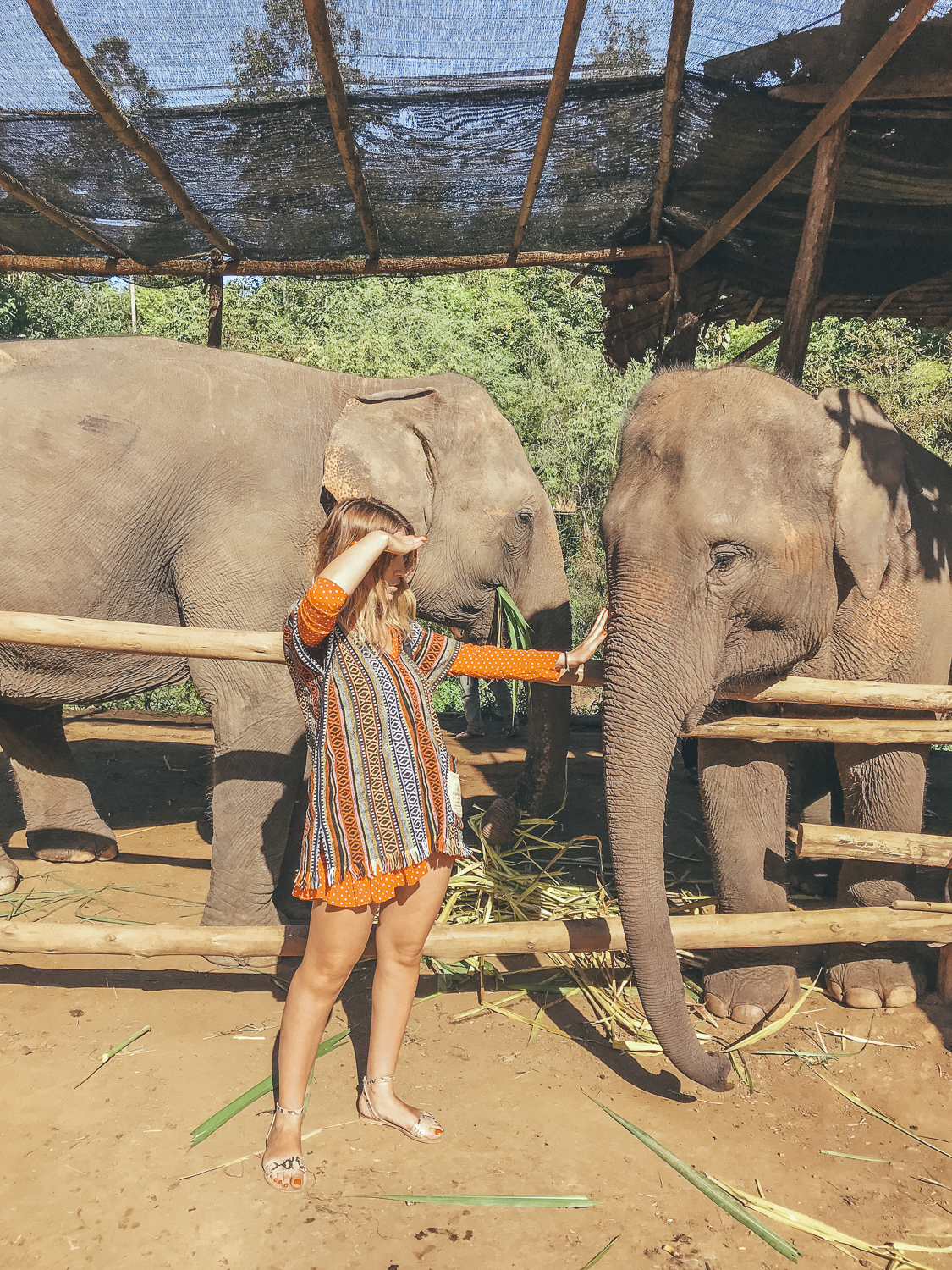 A day well spent at the Elephant Sanctuary Chiang Mai