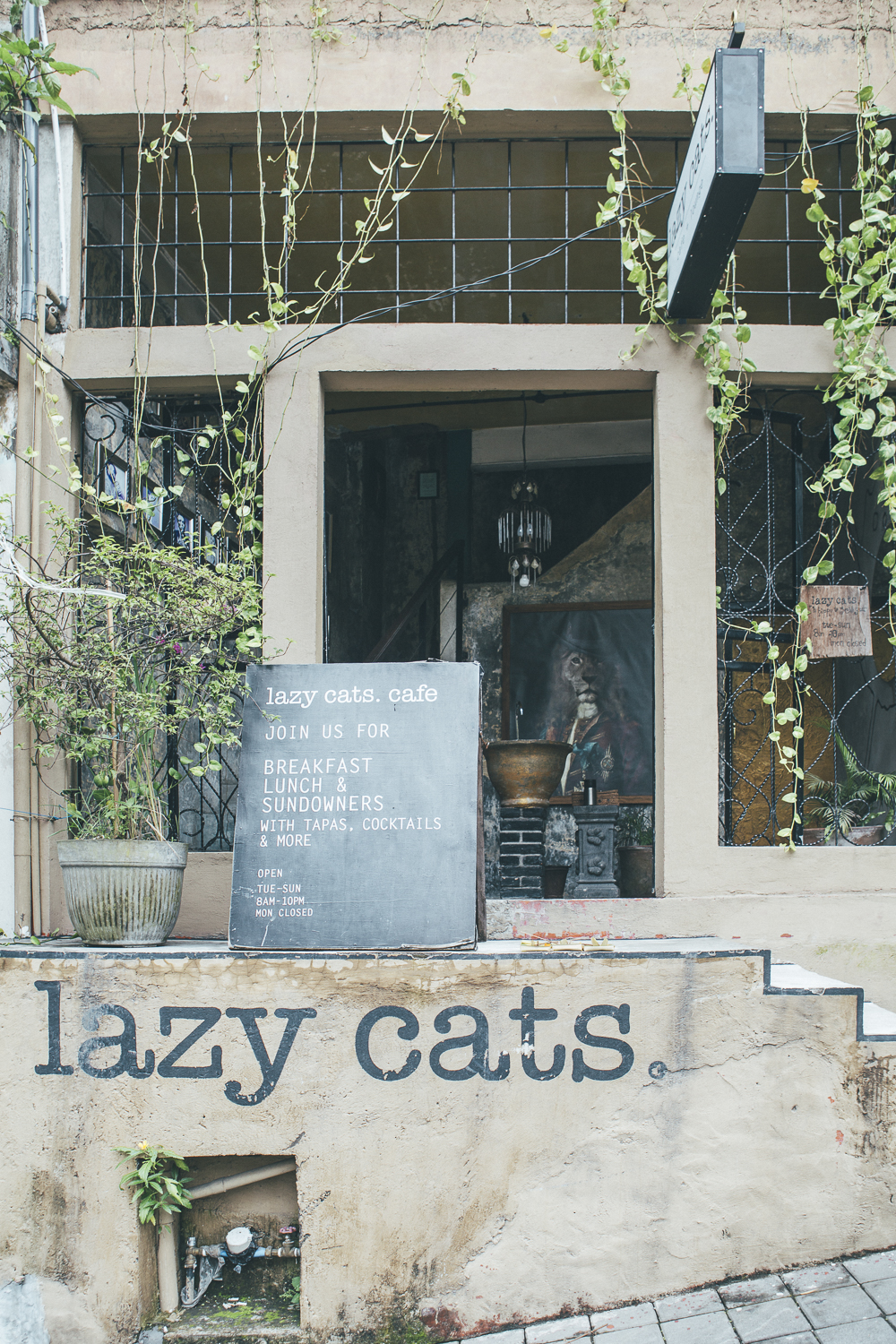 Bali Food guide: Lazy Cats Cafe Ubud