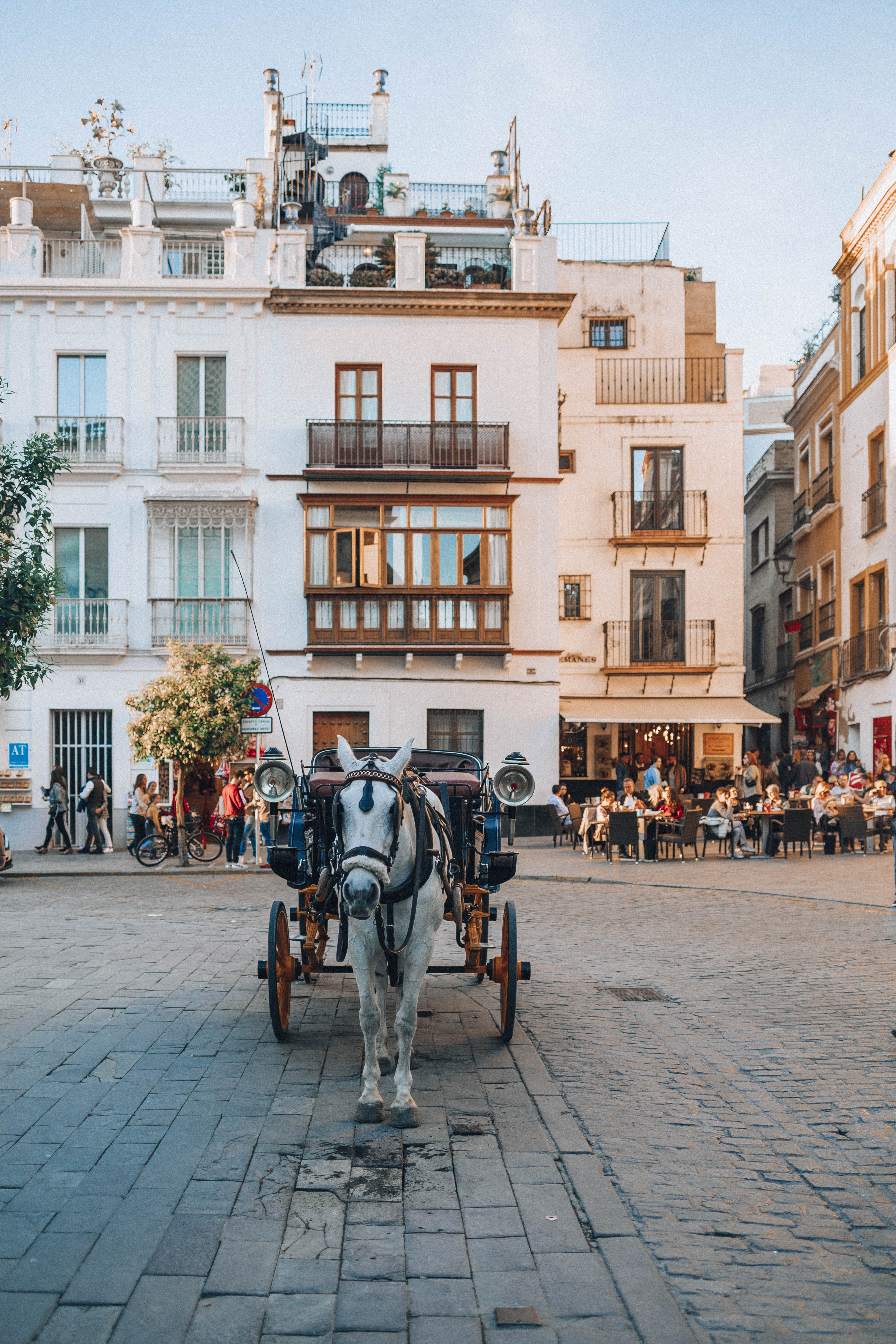the best places in Seville to visit as first timer la giralda