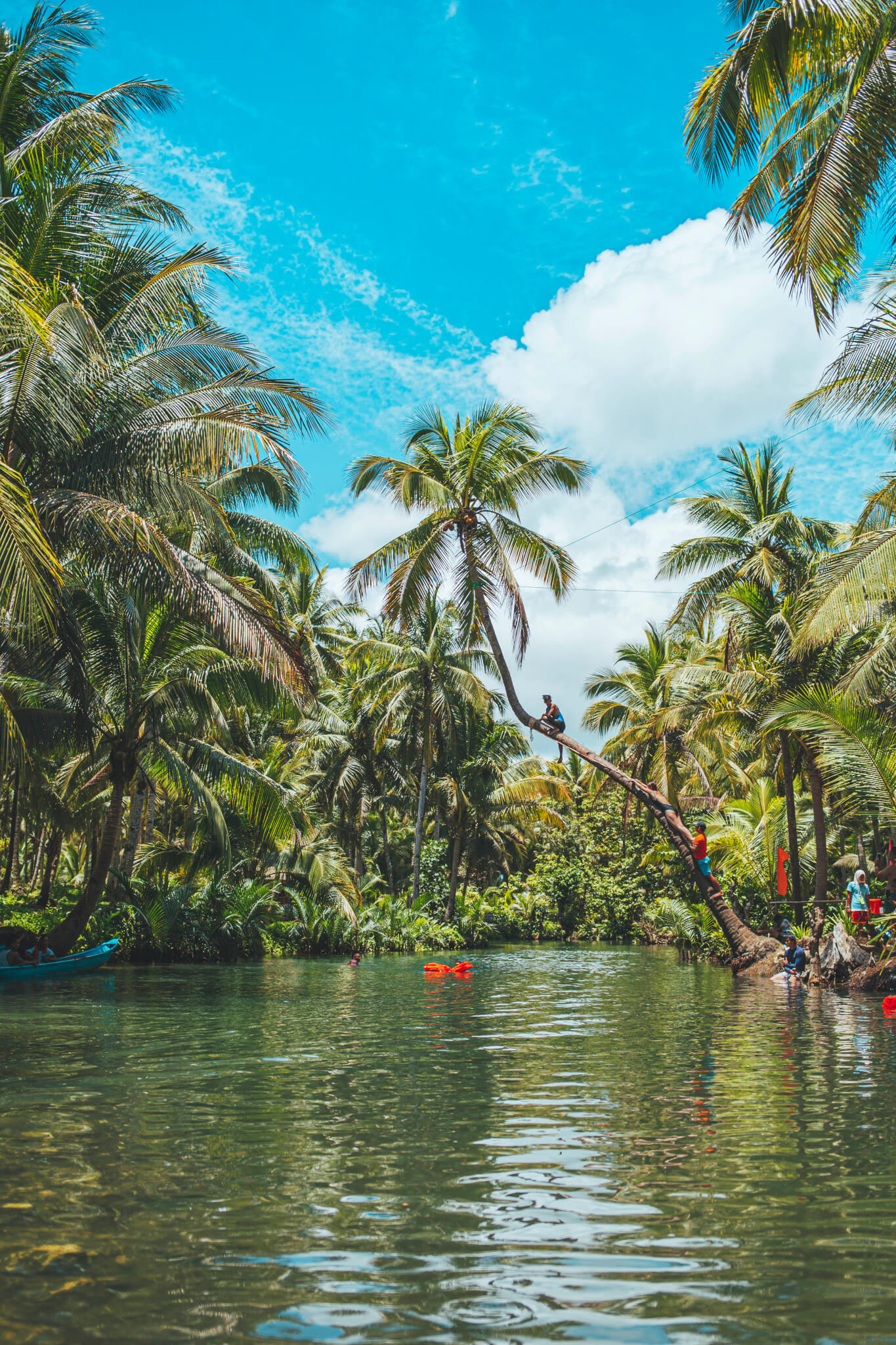 Bent coconut tree over the Maasin river