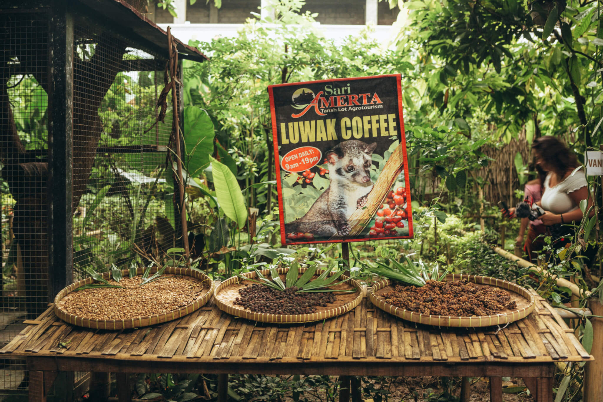 Luwak Coffee Plantation